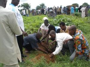 Le Roseau pour l'éducation environnementale dans Non classé Plantation-darbres1-300x225